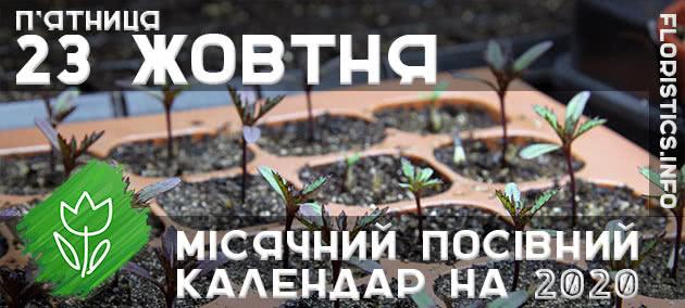 Місячний календар садівника-городника на 23 жовтня 2020 року