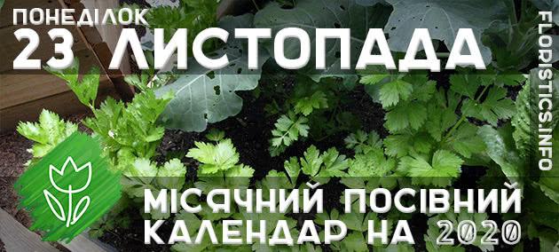 Місячний календар садівника-городника на 23 листопада 2020 року