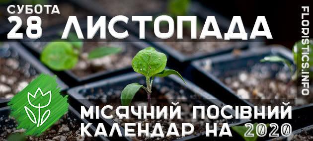 Місячний календар садівника-городника на 28 листопада 2020 року