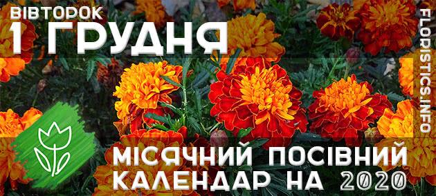 Місячний календар садівника-городника на 1 грудня листопада 2020 року