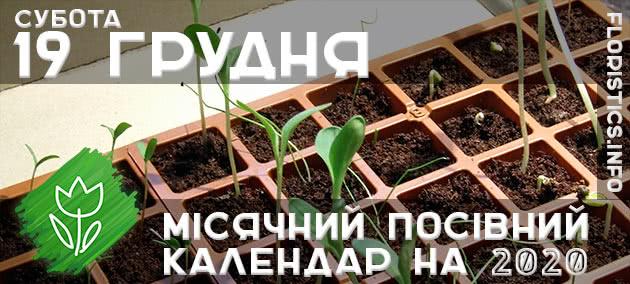 Місячний календар садівника-городника на 19 грудня листопада 2020 року