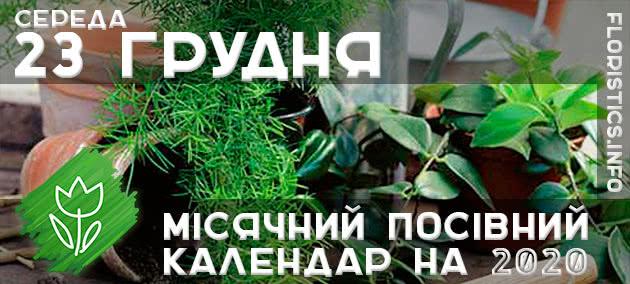 Місячний календар садівника-городника на 23 грудня листопада 2020 року