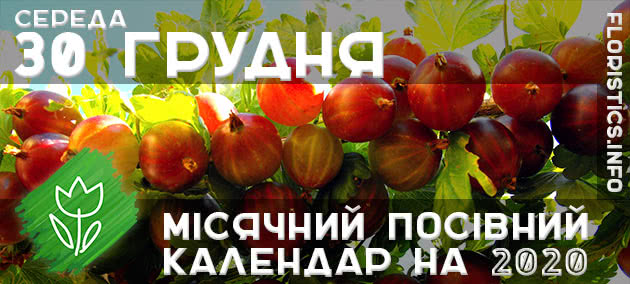 Місячний календар садівника-городника на 30 грудня листопада 2020 року